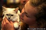 Katten Kijken, Jan Massinkhal